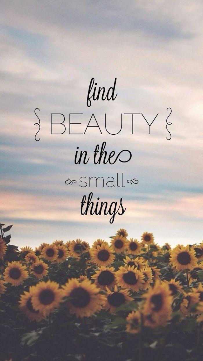 descubre las belleza en las cosas pequeñas, fondos de pantalla tumblr originales y bonitos con frases, fotos de naturaleza