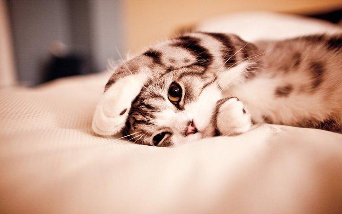 fondos de pantalla tumblr con animales, adorable imagen de un gato en la cama, imagines dulces para descargar