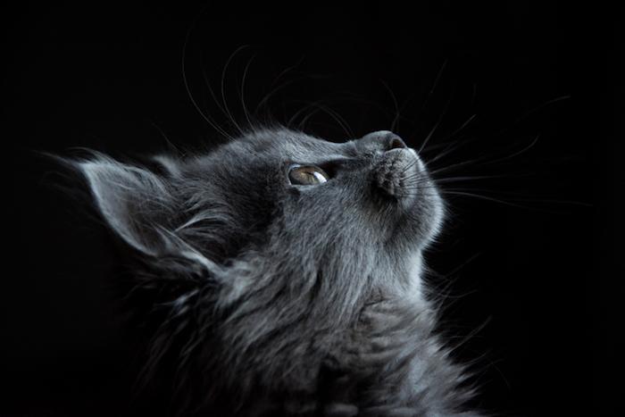 fotos con animales super bonitas, fondos de pantalla tumblr originales, fotos para descargar en tu móvil, bonitas imagines de gatos