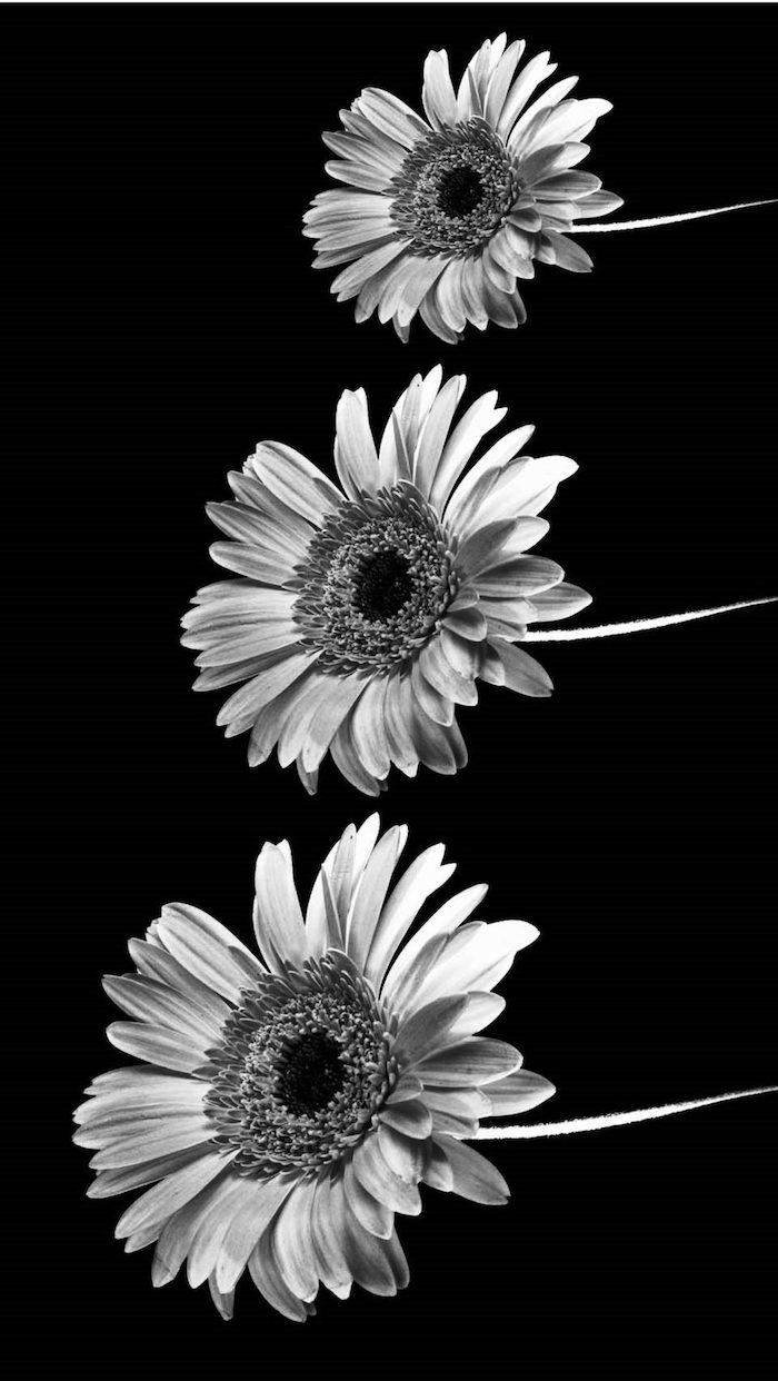 foto fondo negro con girasoles, fondos de patalla movil original, bonitos fondos de pantalla con flores y animales