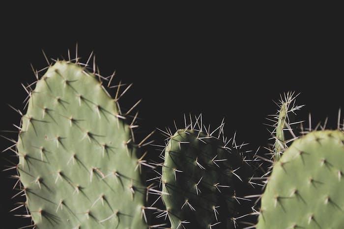 fotos inspiradas en la flora y la fauna, imagines de cactus en fondo negro, descargar fotos de pantalla super originales