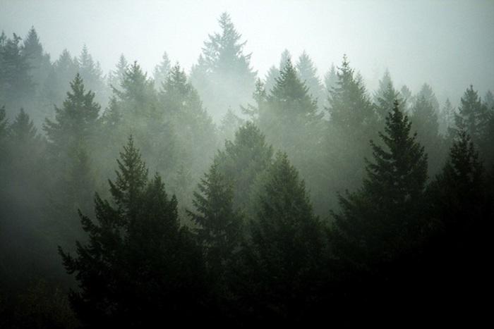 paisajes montañosos para fondos de pantalla, árboles bonitos, imagines para descargar y guardar en tu teléfono movil