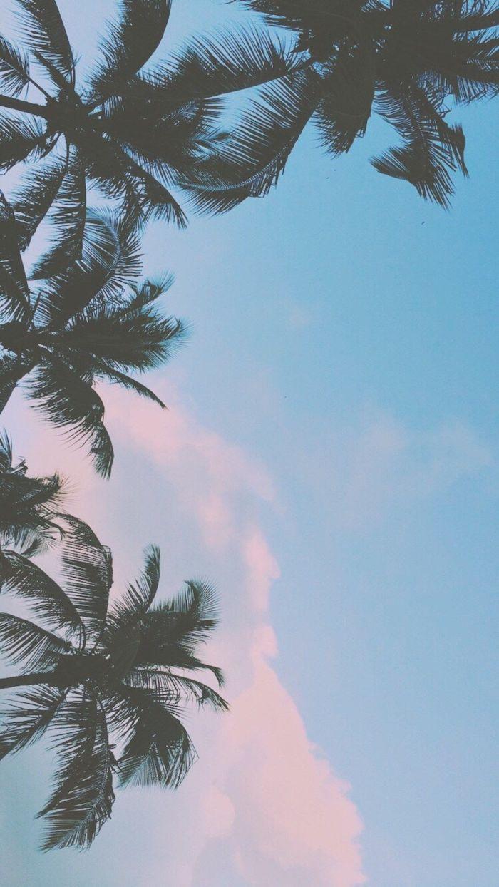 fondos para tu teléfono originales, fondo de pantalla con palmeras cielo nublado, imagines con flora y fauna originales