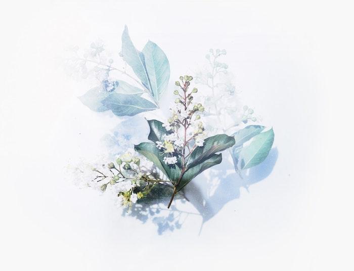 fondos de pantalla frases y dibujos bonitos, las mejores propuestas para tu fondo de teléfono móvil, flores bonitas dibujo