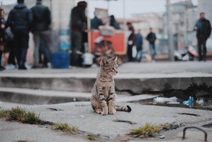 fotos de animales para descargar, adorables imagines de gatos en estilo tumblr, escoge el mejor fondo de pantalla movil
