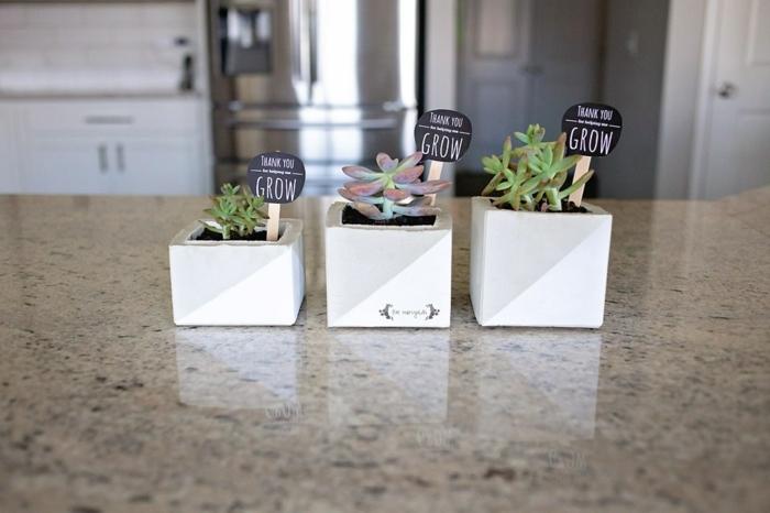tres macetas pequeñas con suculentas, plantas suculentas para regalar, regalos personalizados para profesores super originales
