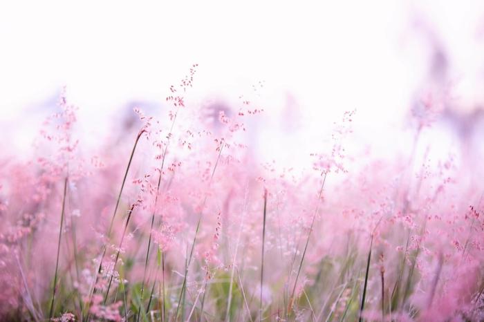 fotos de fondos de pantalla bonitos, las mejores ideas para tu fondo de pantalla, fotos con flores y animales para fondos de pantalla