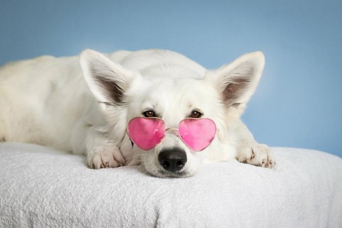 bonito perro color blanco con gafas en rosado, adorables imagines de animales para poner en tu fondo de pantalla