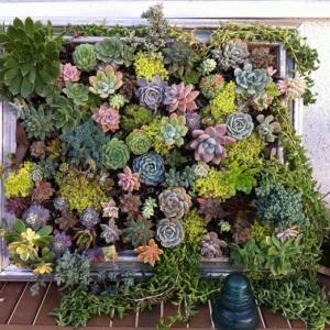 Alucinantes ideas sobre cómo armar un jardín vertical