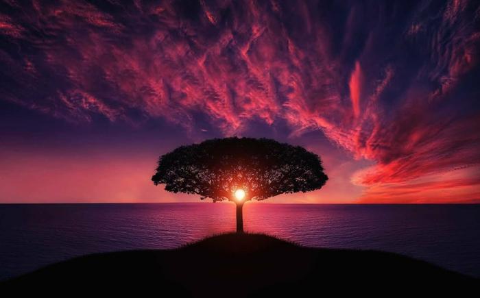 el arbol de la vida, paisaje de mar al atardecer, preciosa imagen en bonitas colores, paisaje en rosado y color lila