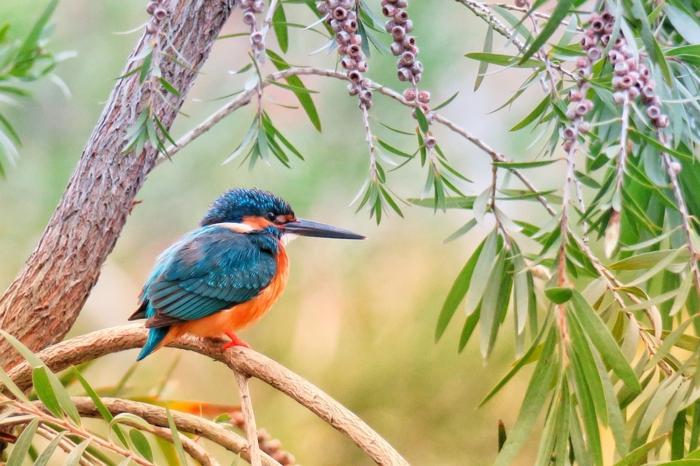 fondos de pantalla gratis con paisajes de naturaleza, las mejores ideas de fondos de pantalla para poner en tu teléfono en verano