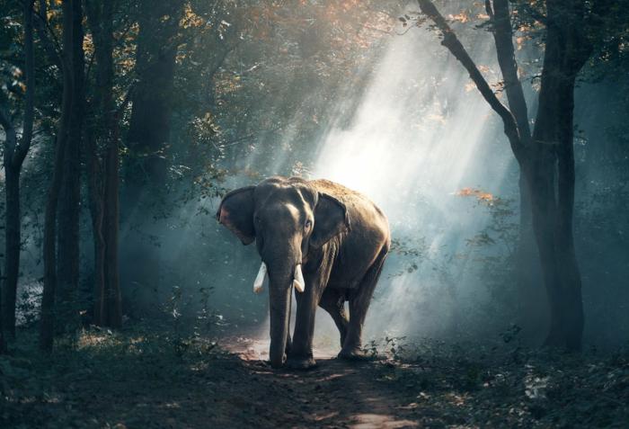 fotografías de animales en la selva, fondos de pantalla gratis, las mejores ideas de imagines para poner como fondo de pantalla