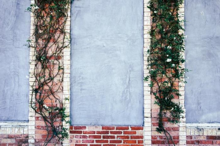 ideas de jardines verticales, plantas trepadoras en las paredes, fotos con diseño de jardines verticales, ideas de decoración espacios abiertos