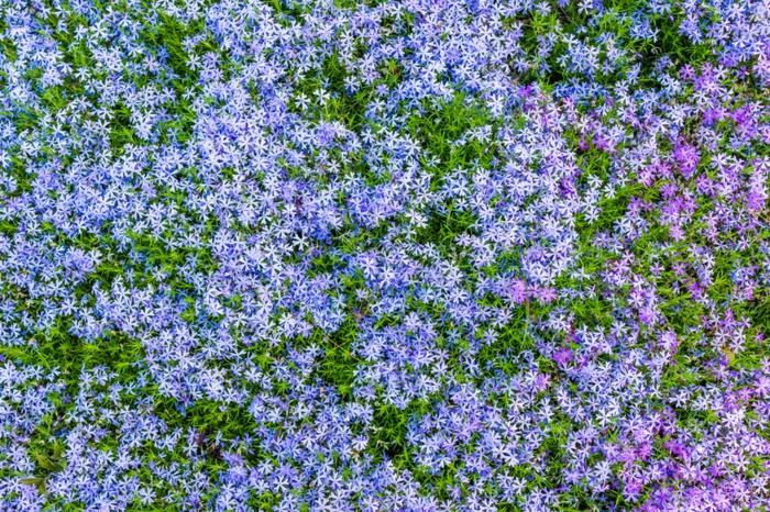 huertos verticales super bonitos con preciosas flores, diseño de jardines con flores en bonitos colores, decoración patio y jardín
