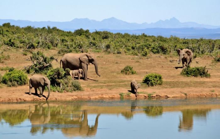 bonita foto de una manada de elefantes cerca del río, fondos de pantalla bonitos para descargar, 100 imagines de fondo de pantalla