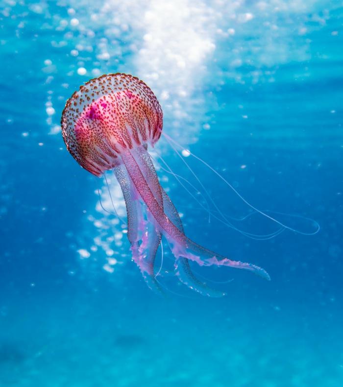 las mejores fotos de animales en colores, fondos de pantalla bonitos, fotos con paisajes de naturaleza para poner en tu fondo