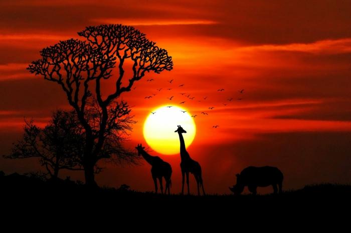 hermosos paisajes de África, fotos de animales impactantes, foto de dos jirafas y un rinoceronte, preciosas imagines con paisajes