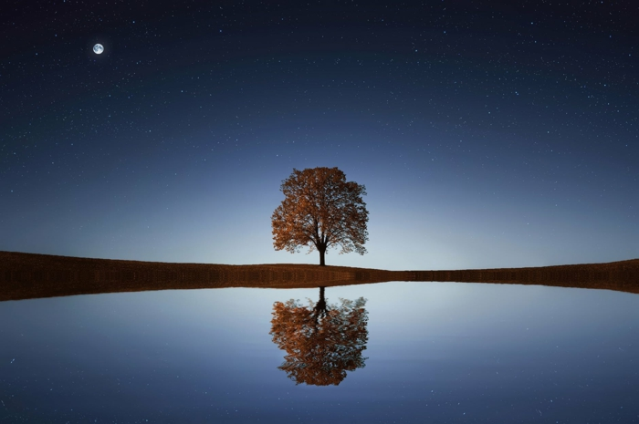 paisajes nocturnos bonitos, árbol bonito en la orilla de un lago, cielo estrellado, las mejores fotos de fondos de pantalla chulos