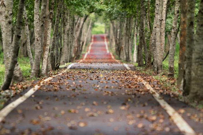 paisajes de otoño bonitos para poner en tu ordenador, fondos de pantalla chulos, árboles de otoño con hojas caídas