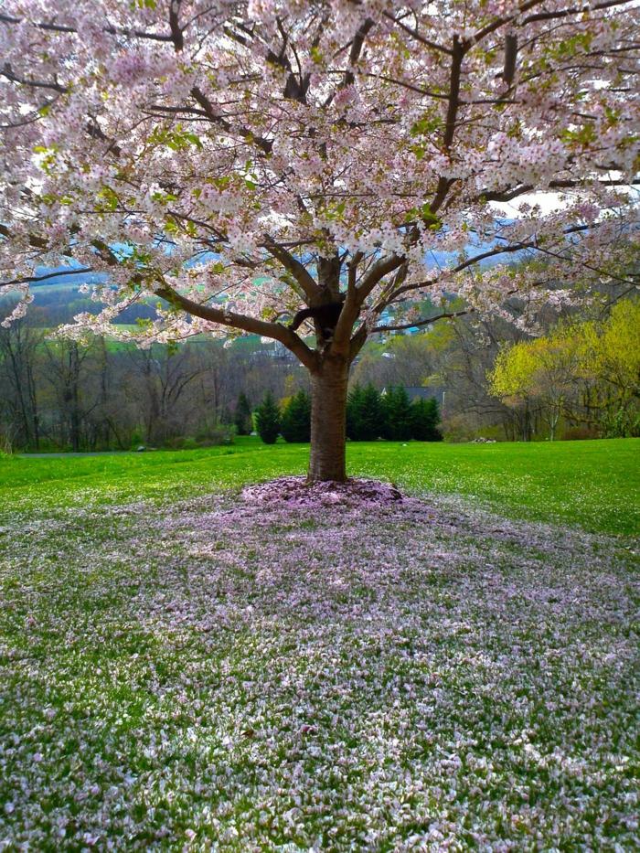 árboles florecidos en imagines, como escoger un fondo de pantalla bonito para tu teléfono móvil u ordenador, fotos descargables