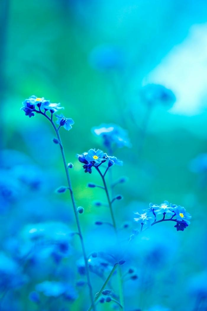 preciosas fotografías de flores de campo, fotos verticales para poner como fondo de tu pantalla de teléfono móvil