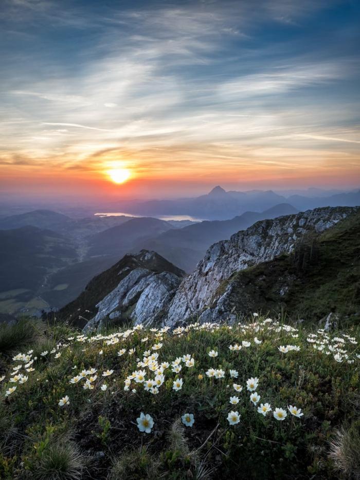 precioso paisaje montañoso con flores de campo en color blanco, la belleza de la montaña en atardecer, fondos de pantalla ordenador