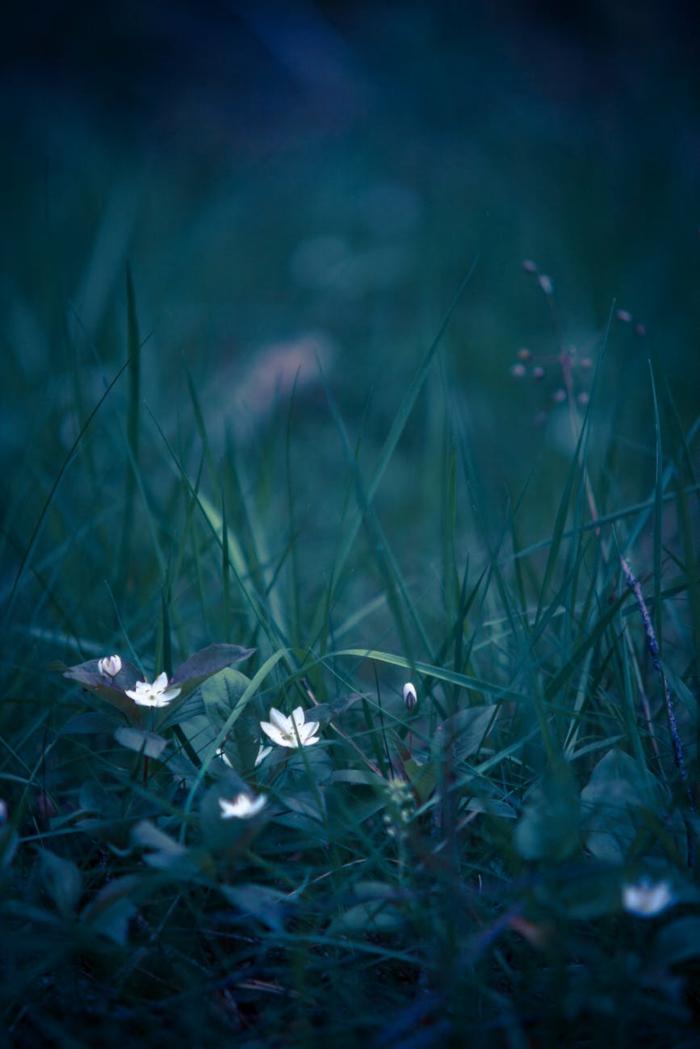 flores de montaña preciosos, las mejores paisajes de naturaleza para descargar gratis y poner en tu teléfono móvil