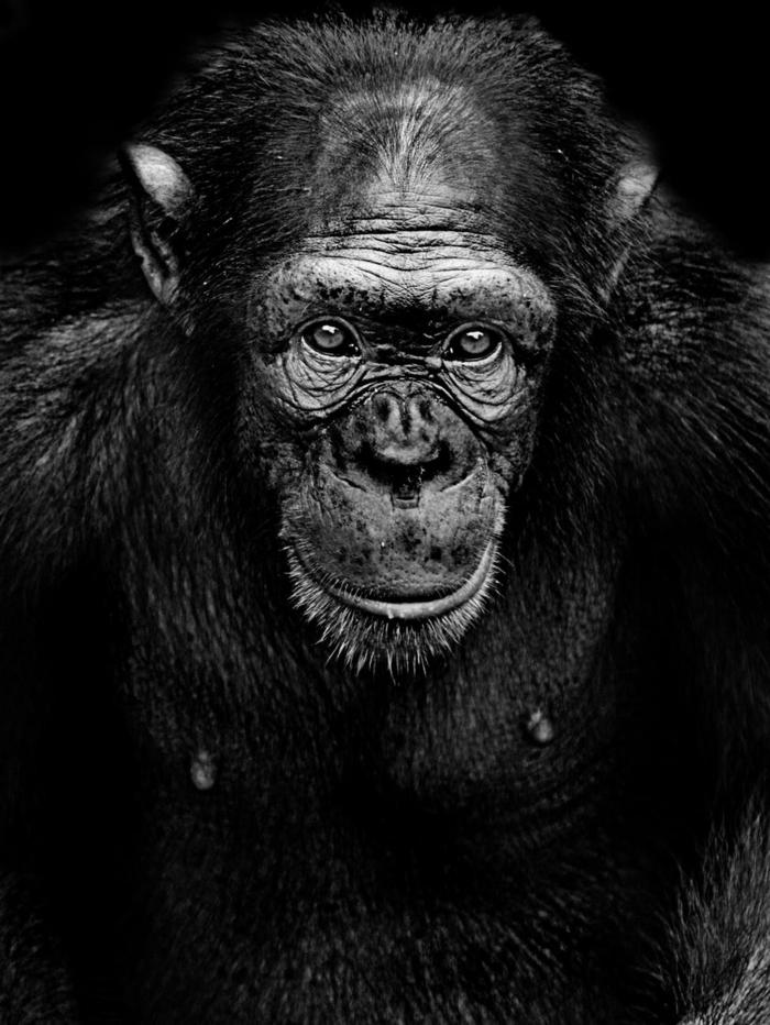fotografías de animales en estilo realista, fondos bonitos para tu teléfono móvil, bonitas imagines de animales, fondos divertidos
