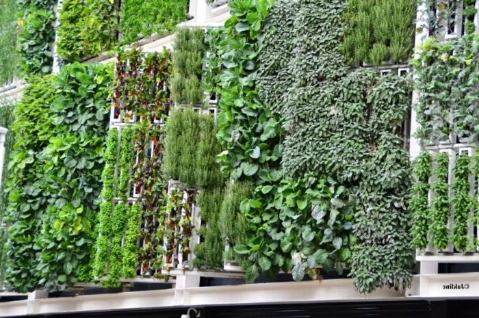 diferentes modelos de jardin vertical interior con diferentes tipos de plantas, como organizar un muro verde en nuestra casa