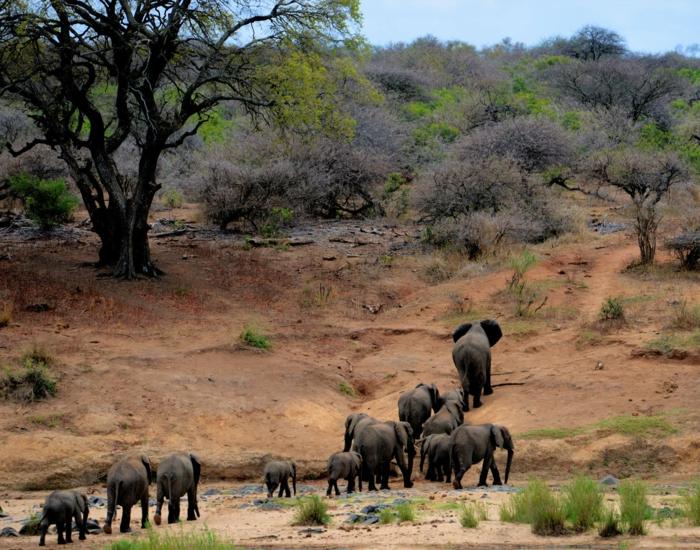 bonita manada de elefantes en la savana, imagines bonitas para usar como fondo de pantalla, preciosos paisajes de Africa