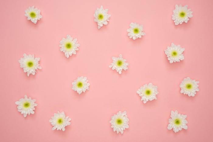 fondos de pantalla con flores, bonito fondo color rosado con flores blancas margaritas, originales ideas de fondos de pantalla