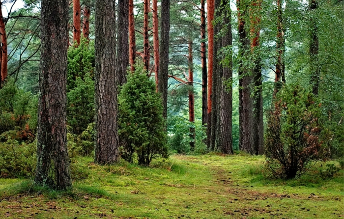 paisajes naturales con bosques y montañas, imagenes de paisajes naturales bonitas que puedes descargar de la galería de imagenes