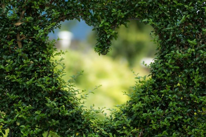 hermosas ideas de descargar fondos de pantalla, fondos de pantalla verdes, imagines de plantas y animales originales