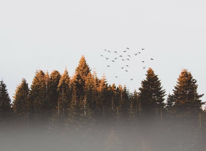 árboles en otoño y aves en pleno vuelo, las mejores imagenes para fondos de pantalla, 100 imagenes para descargar