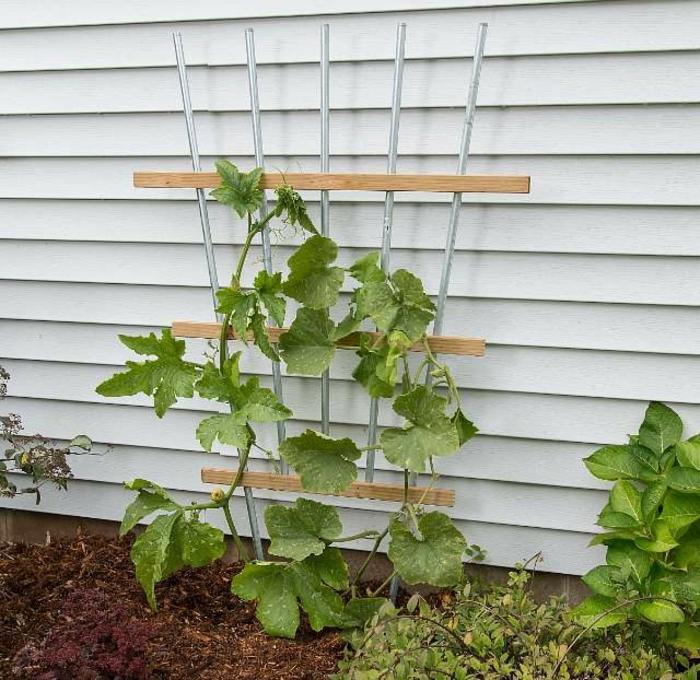 decoracion jardin con diferentes ideas, jardines verticales originales para plantas trepadores, calabazas en jardines verticales