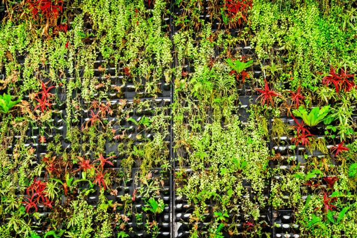 decoración de espacios abiertos, huerto vertical original verde, ideas de cuadros vivos y huertos verticales originales