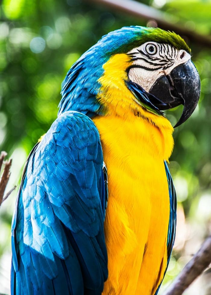 descargar un fondo de pantalla HD con imagines de animales, originales ideas de fotos para tu fondo de pantalla