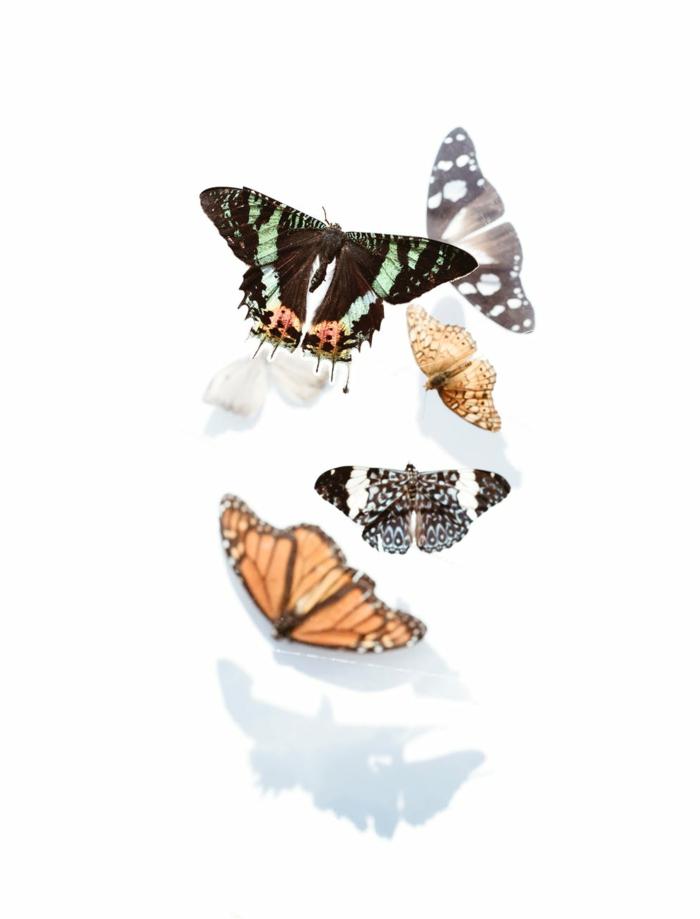 preciosas mariposas en fondo blanco, fondos de pantalla guapos y originales, imagines para descargar gratis en tu teléfono