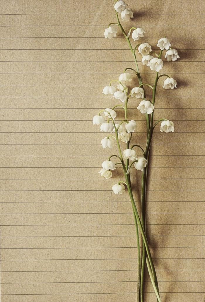 fotografías en estilo vintage para poner como fondo de tu teléfono, fotos de flores bonitas, originales propuestas de fotos para tu móvil