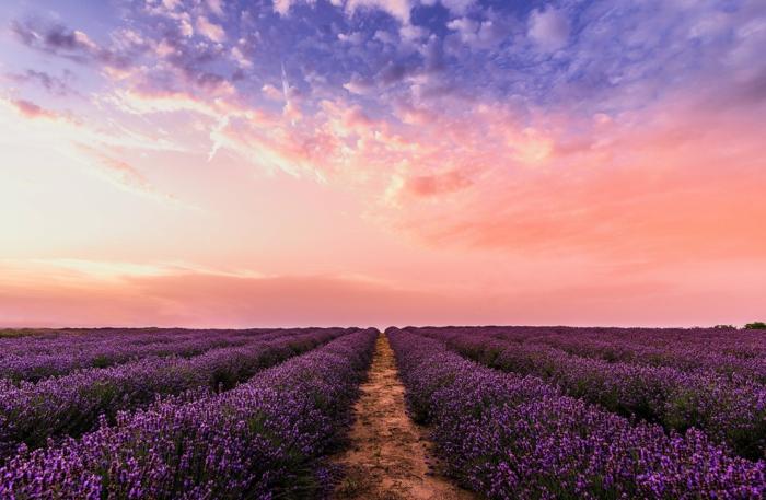 bonita fotografía de campos de lavanda, fondos de pantalla chulos con paisajes naturales, fotografías para descargar