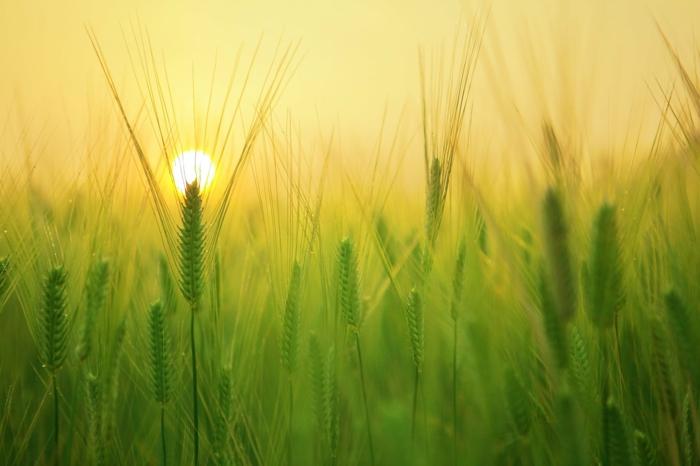 imagenes para fondo de pantalla, fotografías de naturaleza en verano, las mejores imagenes para descargar gratis