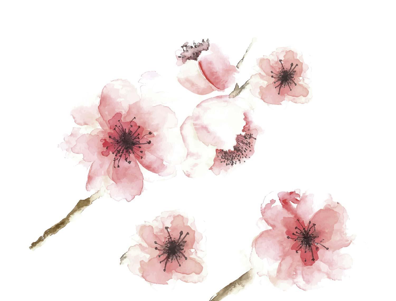flores acuarela en rosado suave, las pinturas de flores más hermosas, descarga más de 90 imágenes de pinturas con acuarelas