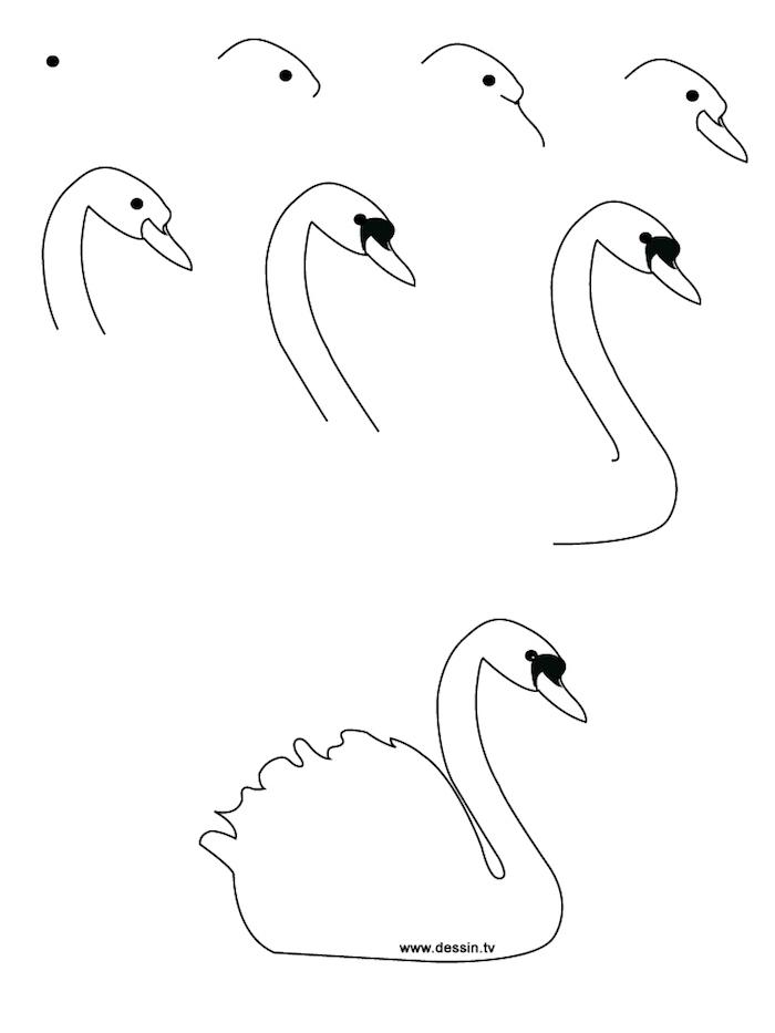 como dibujar un cisne paso a paso, pasos básicos para aprender a dibujar animales, dibujos a lápiz sencillos y hermosos
