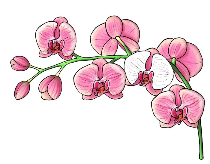 dibujos de orquídeas originales, ideas de fotos de dibujos para descargar, dibujos de flores para redibujar, precioso dibujo de orquídeas