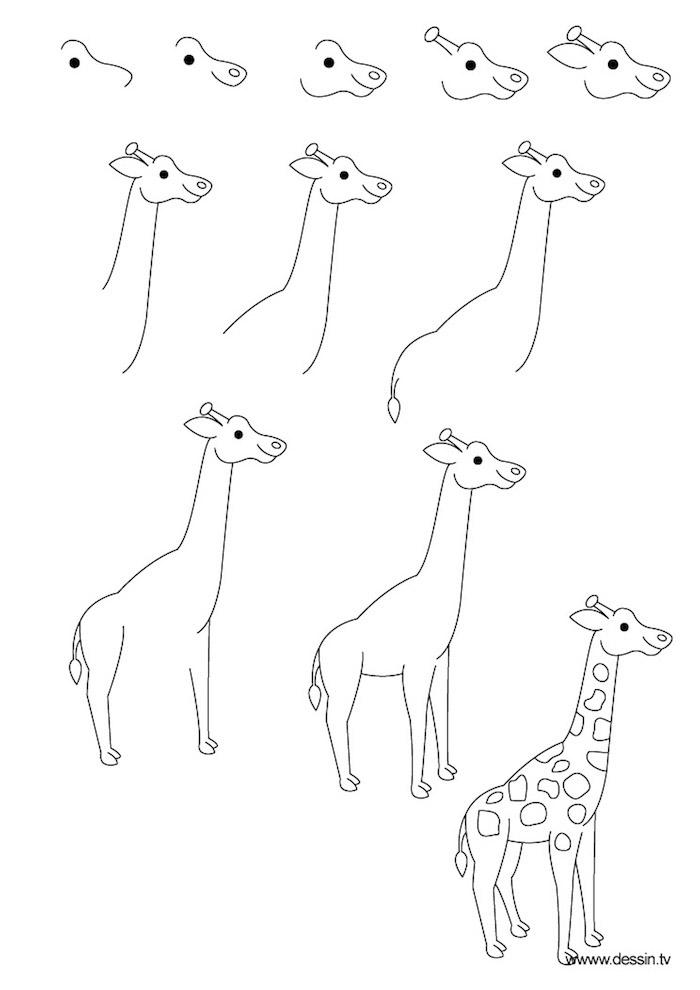 simpáticas ideas sobre como dibujar animales con unos pasos básicos, ideas para adultos y pequeños, dibujos bonitos de animales