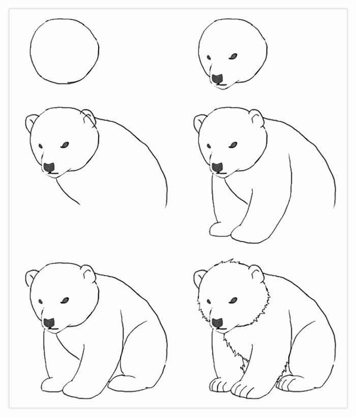 seis pasos sencillos para dibujar un oso polar, dibujos y fotos para niños y principiantes, super bonitas ideas de dibujos fáciles