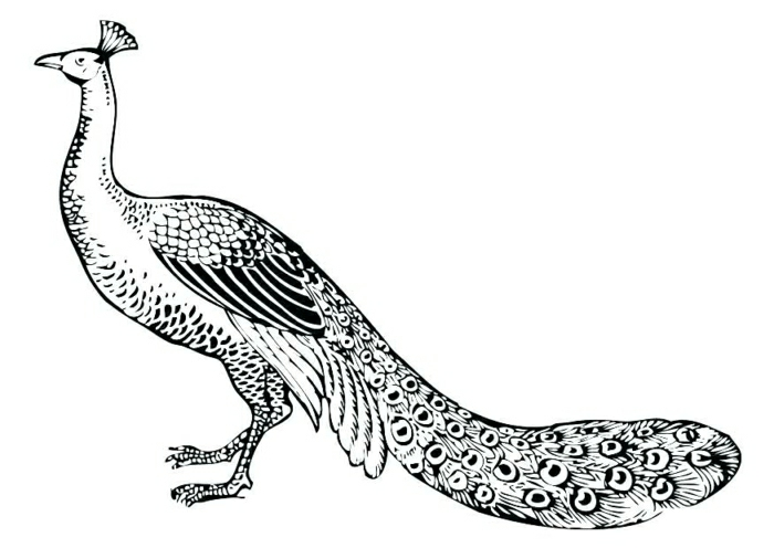 diseño de tatuaje pavo real, ideas de tatuajes en dibujos, dibujos de tatuajes originales, como escoger un tattoo