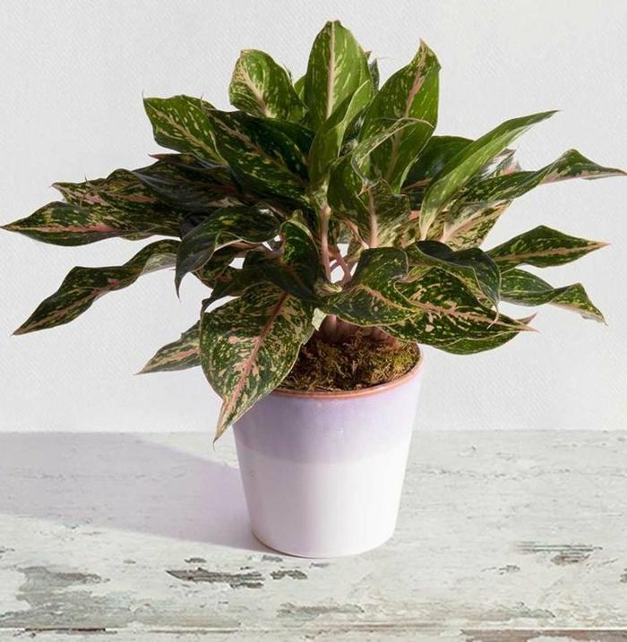 regalos de cumpleaños originales para amantes de las flores y las plantas verdes, más de 80 ideas de fotos de regalos