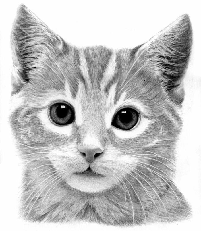 dibujos en blanco y negro con lapiz, hermoso dibujo en estilo realista, dibujos de animales realistas ideas de dibujos en blanco y negro bonitos para avanzados