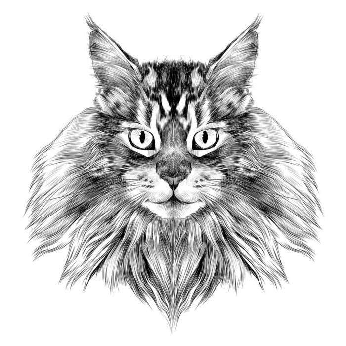 dibujos de animales super realistas, dibujo de gato en estilo realista, los mejores dibujos de animales en mas de 70 fotos